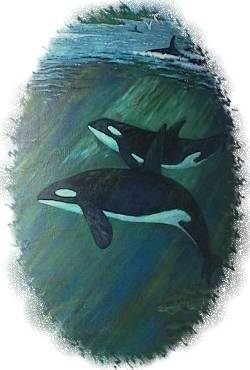 There is a retired can buoy near Centennial Park that is adorned with incredible marine scenery. Shown here are two Orcas or Killer Whales from the Landmark Mural in Ganges.